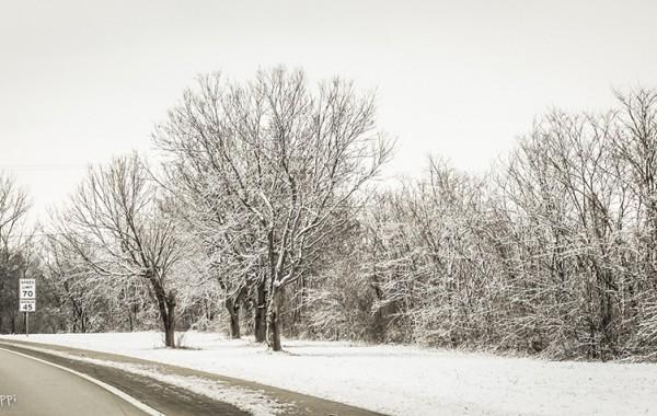 Roadside Frost